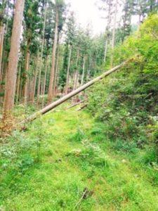 奥山自然遊歩道3